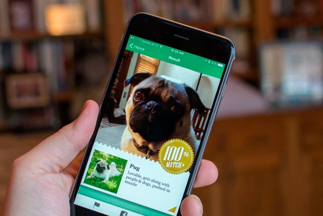 Fetch! – aplikace, která vám prozradí, kterému psímu plemenu se nejvíce podobáte
