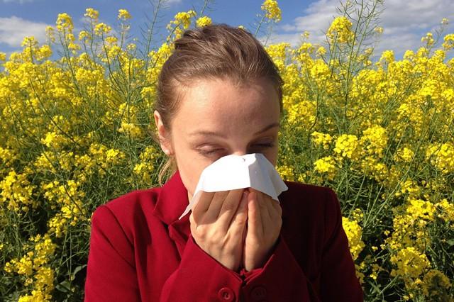 Alergici, pomůže vám aplikace Pylové zpravodajství!